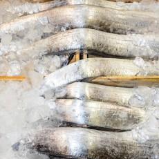 국내(목포)산 왕대 먹갈치 10마리