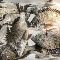 自然산 活 감성돔 5kg(4~5마리)