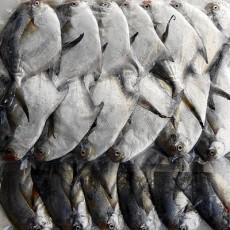 자랭이병어(회무침용) 1kg