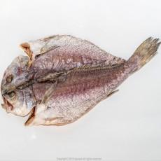 반건조 할복민어(통치 35cm~40) 2마리